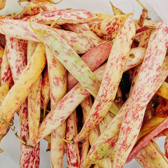 Have you ever tried cranberry beans (aka borlotti beans)? They have a similar fl