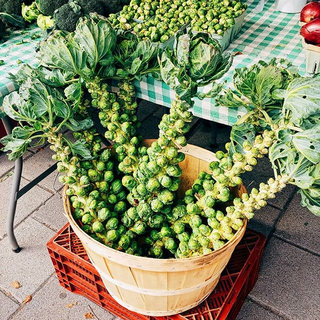 Hi #Ottawa! Ever wondered how Brussel sprouts grow? Check out these stalks from